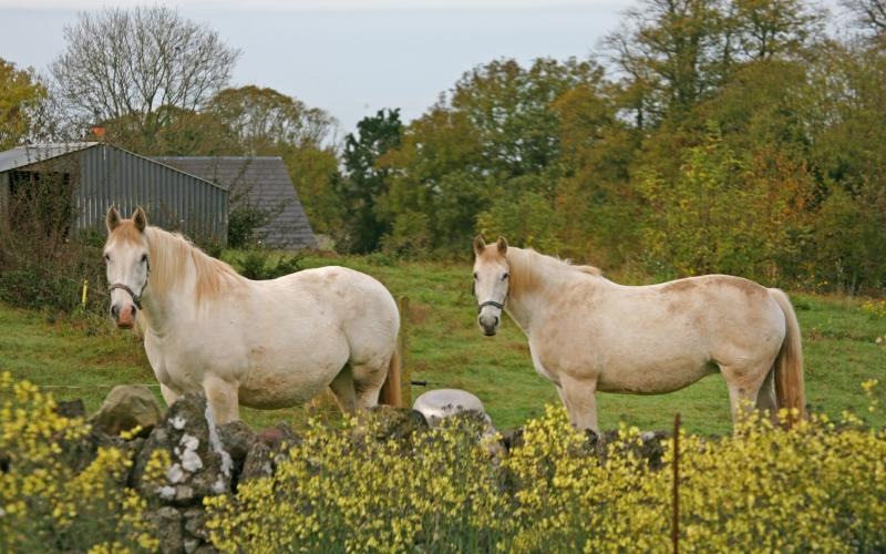 Our beautiful horses at Rigneys Farm