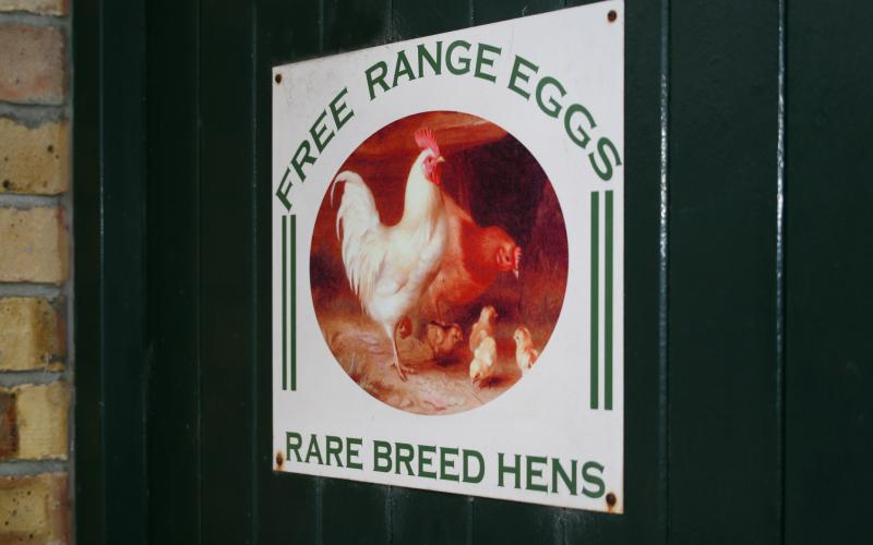 Our free range eggs - perfect for breakfast
