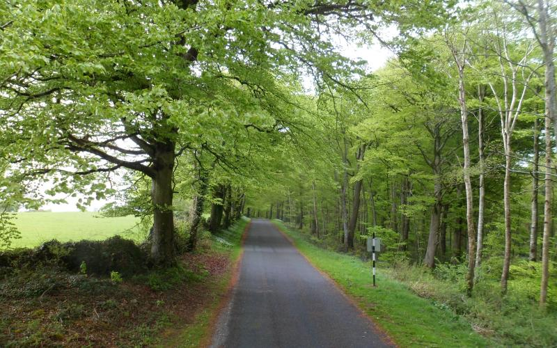 The Road to Curraghchase - Rigneys Farm Guesthouse