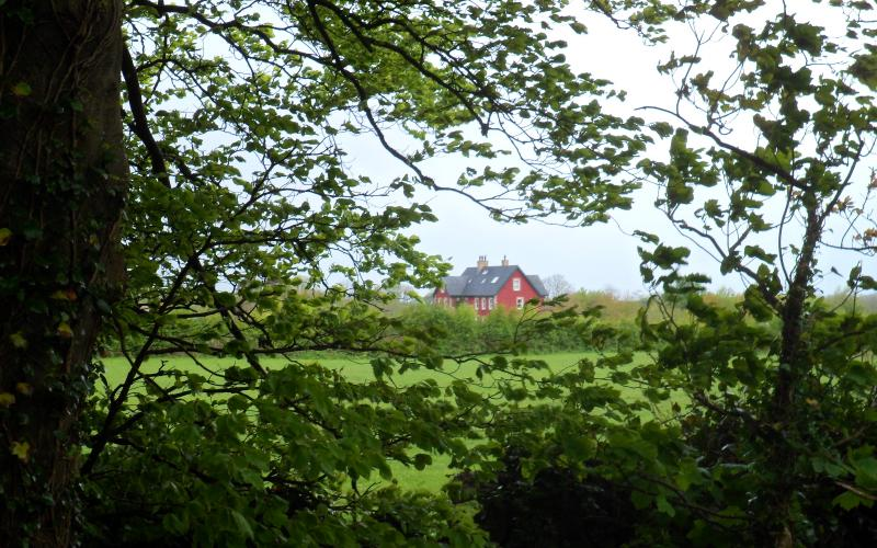 A view through the trees of Curraghchase Forest Park of Rigneys Farm B&B