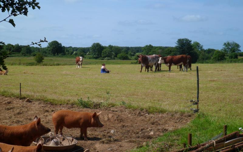 Chatting to the animals on Rigneys Farm